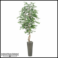 8' Black Olive Tree in Tall Round Metal Planter