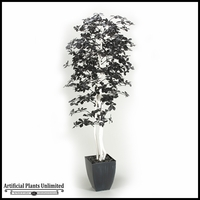 7' Black Olive Tree with White Trunks in Square Metal Planter
