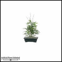 20in. Bonsai Oriental Bamboo