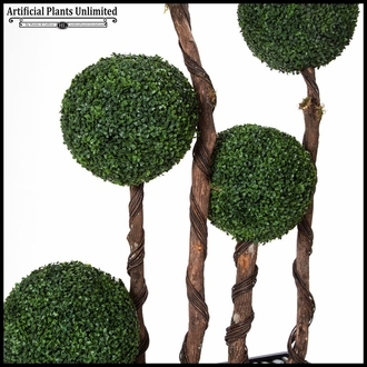 6.5' Boxwood Ball Screen in Rectangle Planter
