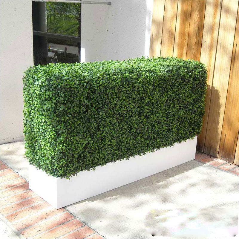 Boxwood hedge privacy screen in modern fiberglass planter for Outdoor privacy screen planter