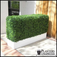 Boxwood Hedge Privacy Screen in Modern Fiberglass Planter 72in.L x 12in.W x 72in.H, Outdoor Rated
