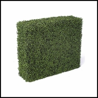 Boxwood Hedges, Outdoor