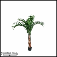 Broad Leaf Kentia Palm Tree 6'