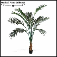 Broad Leaf Kentia Palm Tree 7'