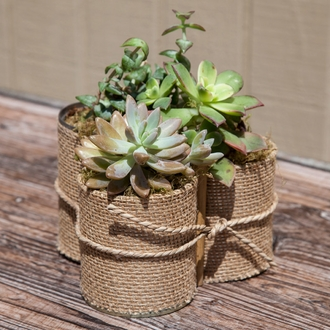 Burlap Wrapped Planter Trio w/ Live Succulents