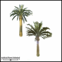 25' Canary Date Palm Outdoor Rated