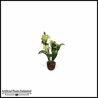 19.5in. Cattleya Orchid Plant