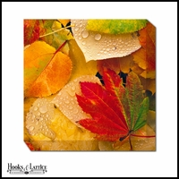 Colorful Fallen Leaves - Canvas Artwork