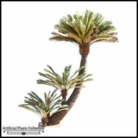 9' Curved King Cycas Tree