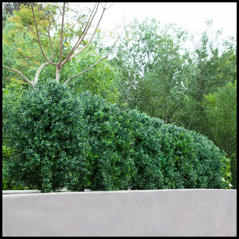 outdoor faux boxwood shrubs | artificial plants unlimited