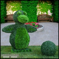 6'H x 3' SQ Custom Logo or Figure Boxwood Topiary Shape, Outdoor Rated