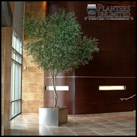 Custom Made Fabricated Indoor Trees