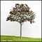 Custom Made Fabricated Outdoor Trees