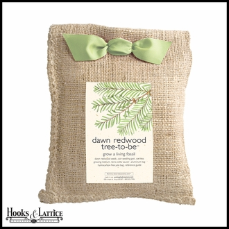 Dawn Redwood Tree Growing Kit in Burlap Bag