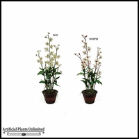 37in.  Dendrobium Orchid Plant (2 Colors)