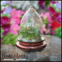 Discontinued Terrariums