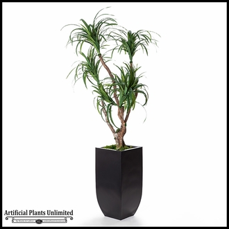 7' Dracaena in Metal Planter