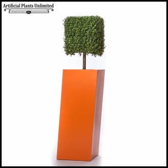 Duraleaf Boxwood Hedges, Outdoor