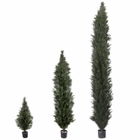 4', 6', 8', 10' or 12' Duraleaf Cypress | Arborvitae, Outdoor