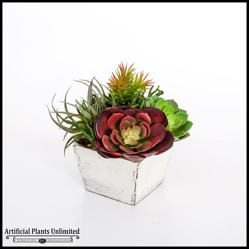 Echeveria and tillandsia mix in rustic wood planter 7inlx7inwx11inh click to enlarge mightylinksfo