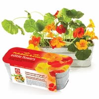 Edible Flower Kit - Nasturtiums