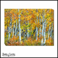 Fall Foliage Aspen Trees - Canvas Artwork