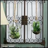 Fern in Large Hanging Glass Teardrop