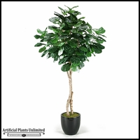 6.5' Fiddle Leaf Fig Tree in Round Glossy Black Resin