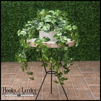 3' Pothos Bush, Fire Retardant