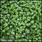 Boxwood Indoor Artificial Living Wall 96in.L x 60in.H