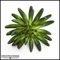 5.5in. Finger Succulent, Gray/Green