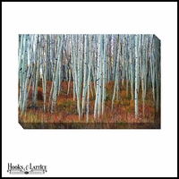 Forest of Aspen Trees - Canvas Artwork