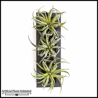 16in.L Curly Tillandsia with Zinc Black Rectangle Tray