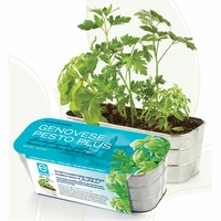 Genovese Pesto Plus Herb Kit