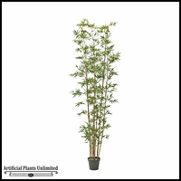 Golden Bamboo Tree 10'