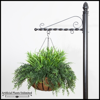 Grass/Buckler Fern in 22in Hanging Basket, Outdoor Rated