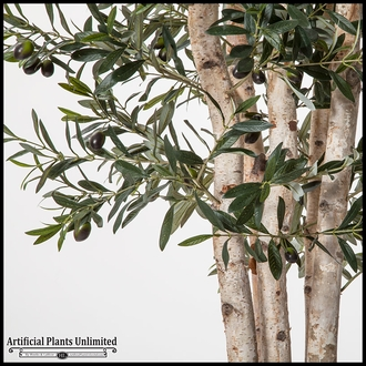 7' Green Olive Tree in Zinc Planter