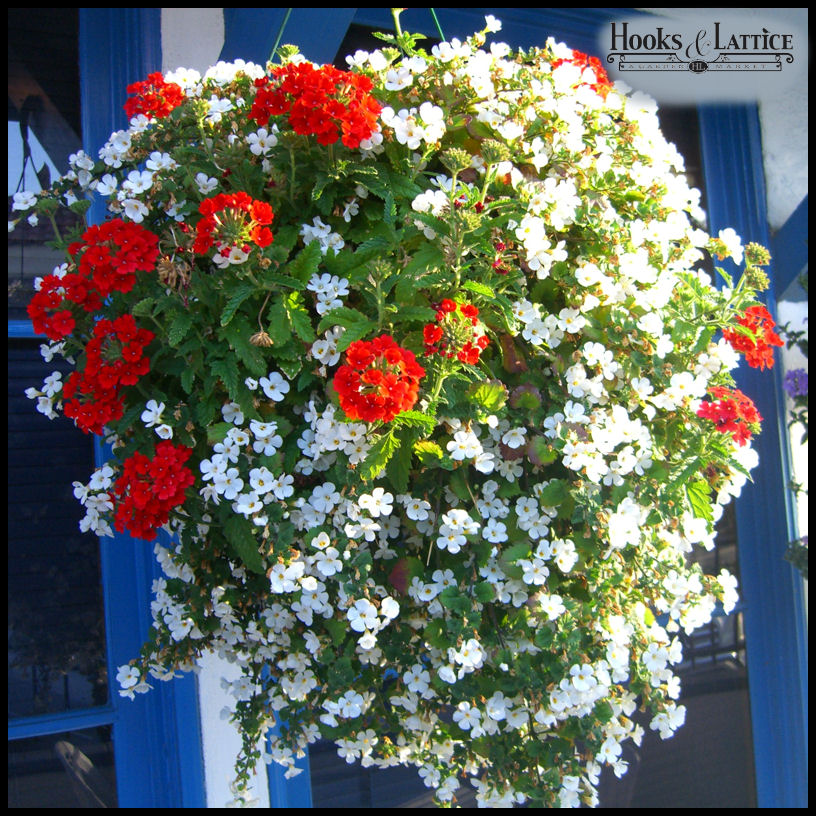Who Has Hanging Flower Baskets On Sale : Hanging baskets