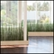 6'H Horsetail Reed by the Square Foot, Indoor