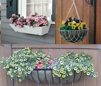 How To - Baskets & Window Boxes