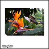 Hummingbird and Bird of Paradise - Canvas Artwork