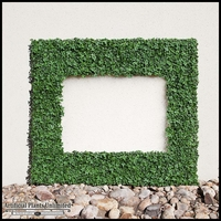 UV Protected English Ivy Frames