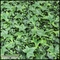 English Ivy Indoor Artificial Living Wall 72inL x 48inH