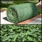 Indoor English Ivy Rolls