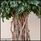 Indoor Rated Banyan Tree