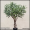 Indoor Rated Olive Tree