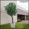 Inherently Fire Retardant Rated Oak Tree