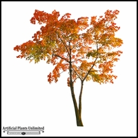 Inherently Fire Retardant Rated Sugar Maple Tree