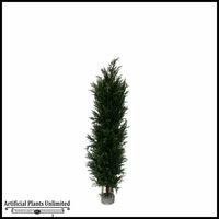Italian Cypress Tree (3 Sizes)